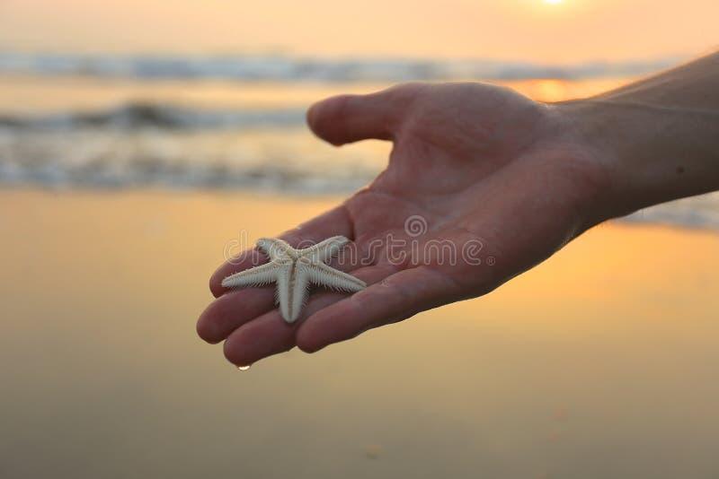 Морская звезда на руке с предпосылкой пляжа в Индии стоковые изображения rf