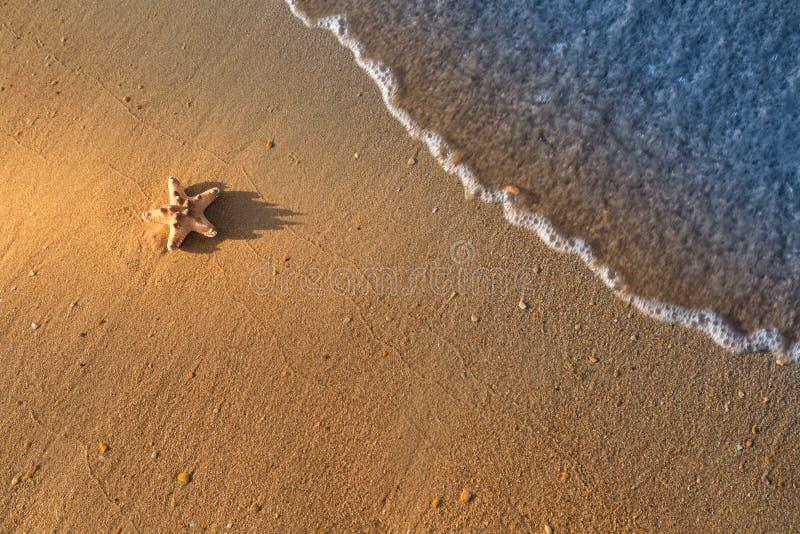 Download Морская звёзда лежит на влажном песке на пляже Стоковое Изображение - изображение насчитывающей coastline, concept: 81800885