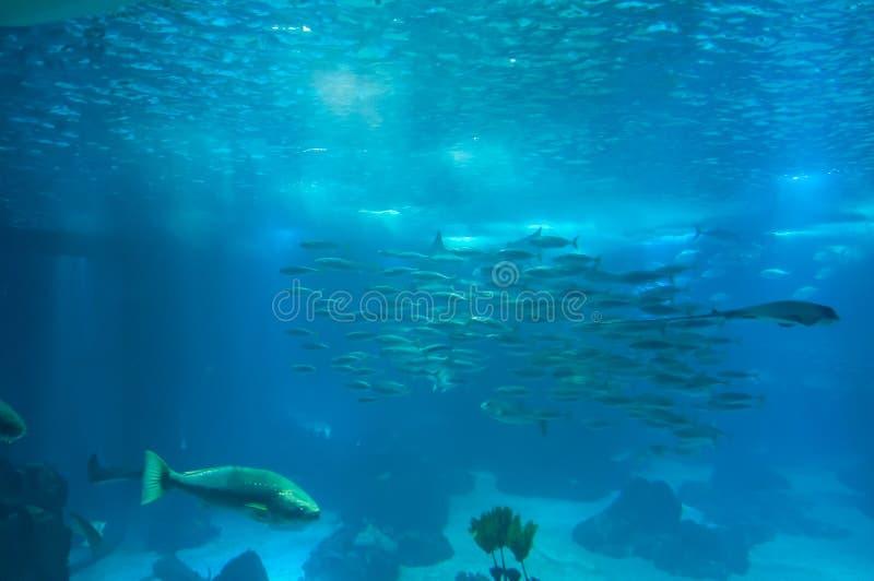 Морская флора и фауна в oceanarium Лиссабона, Португалии стоковое изображение