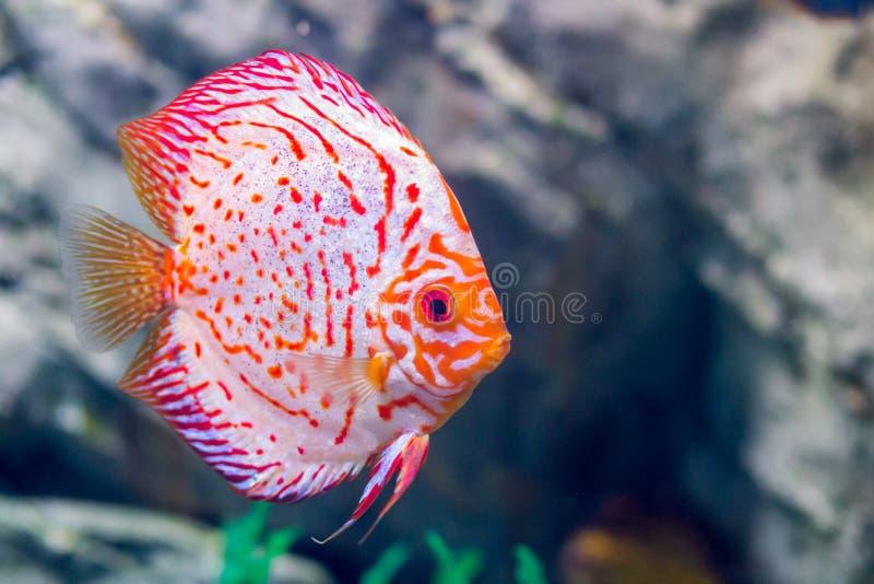 Морская флора и фауна подводного мира, не должна принять стоковая фотография
