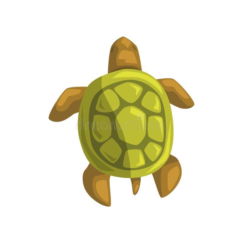 Морская черепаха, гад, осматривает сверху иллюстрацию вектора шаржа иллюстрация вектора