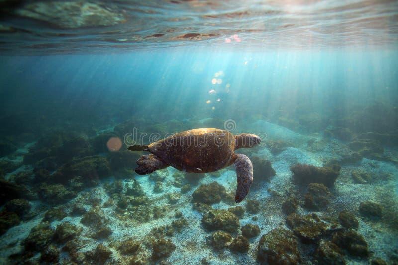 Морская черепаха подводная стоковые фото