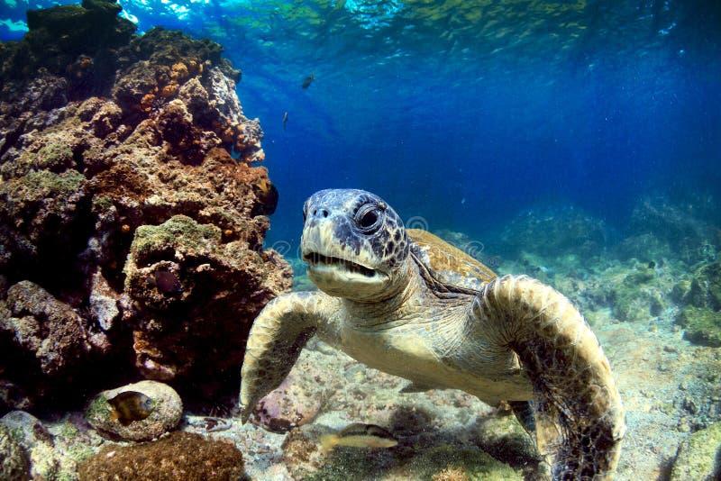 Морская черепаха подводная стоковая фотография