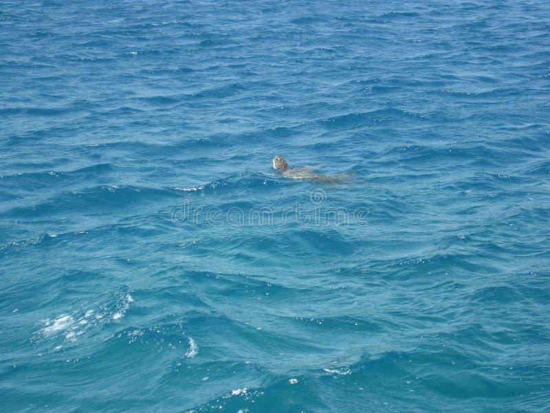 Морская черепаха Турции стоковые изображения
