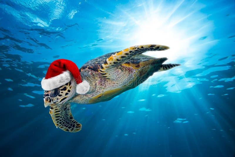 Морская черепаха Hawksbill с шляпой santa стоковое изображение rf