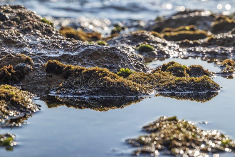 Морские бассейны на утесах с морской водорослью морем стоковая фотография