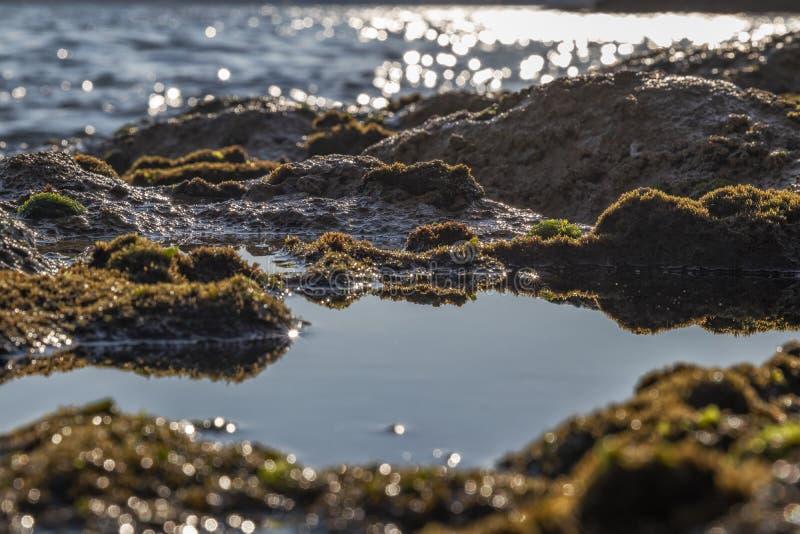 Морские бассейны на утесах с морской водорослью морем стоковая фотография rf