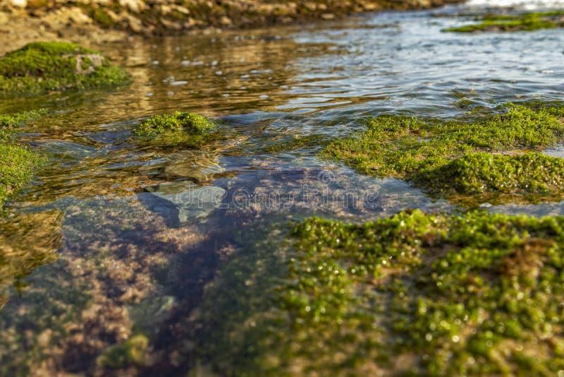Морские бассейны на утесах с морской водорослью морем стоковое фото