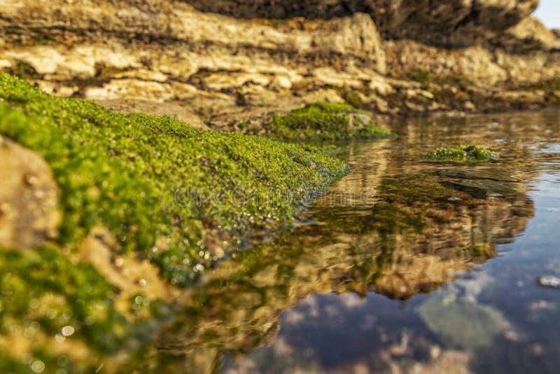 Морские бассейны на утесах с морской водорослью морем стоковые изображения
