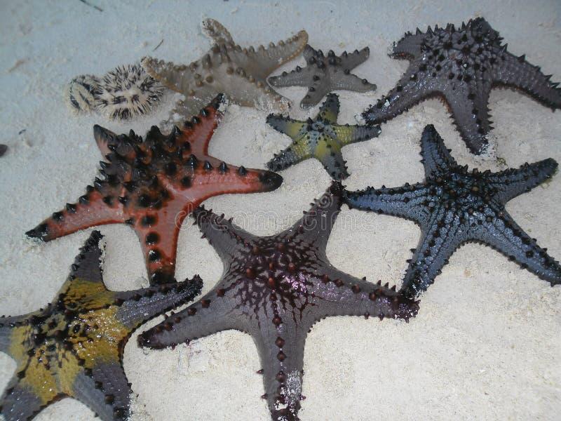 Морские звезды стоковые изображения