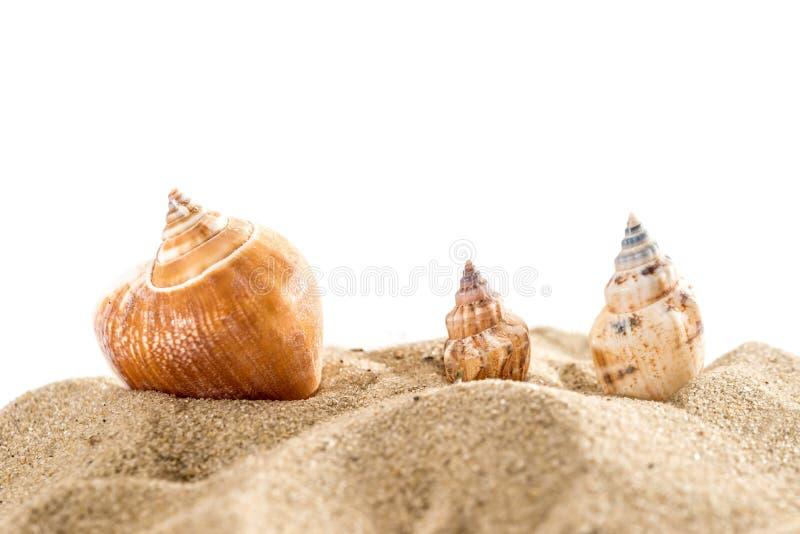 Морские звёзды и раковина на изоляте песка на белизне лето концепции стоковое фото rf