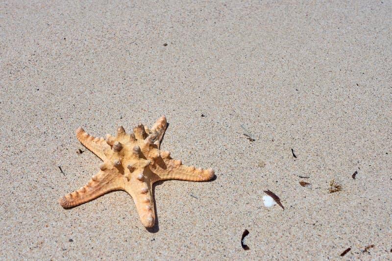 Морские звёзды на песке как естественная предпосылка стоковые изображения rf