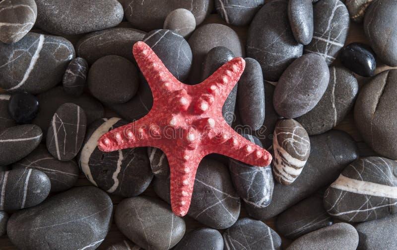 Морские звёзды на предпосылке камешков пляжа стоковые изображения rf