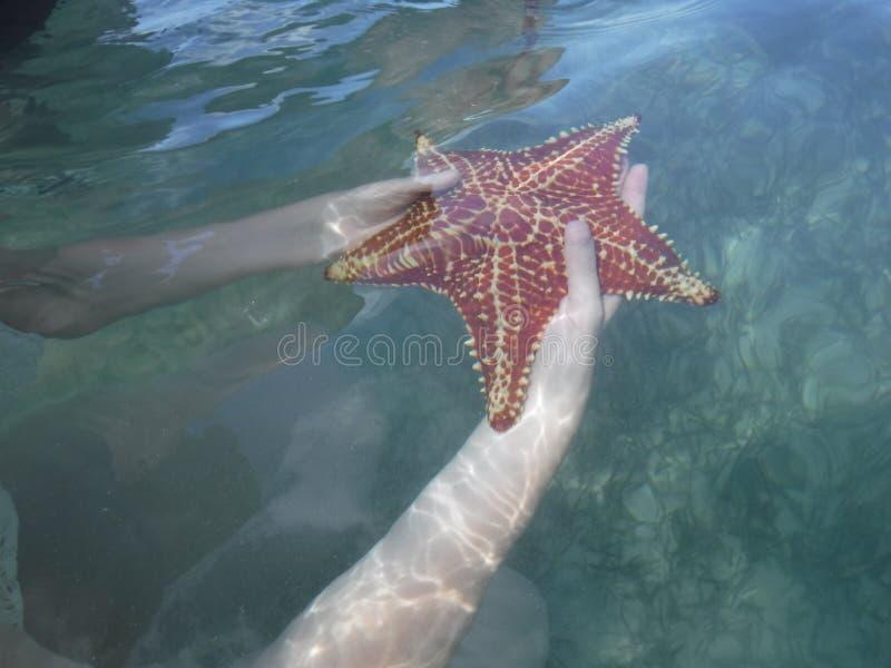 Морские звёзды под морем стоковые фотографии rf