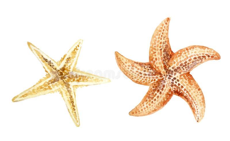 Морские звёзды акварели стоковое фото rf