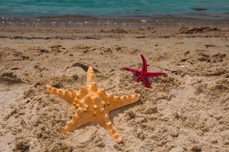 Морские звёзды большие и малые на песке стоковое изображение rf