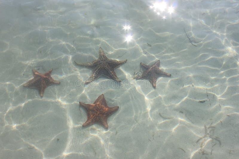 Морские звёзды в воде стоковые фотографии rf