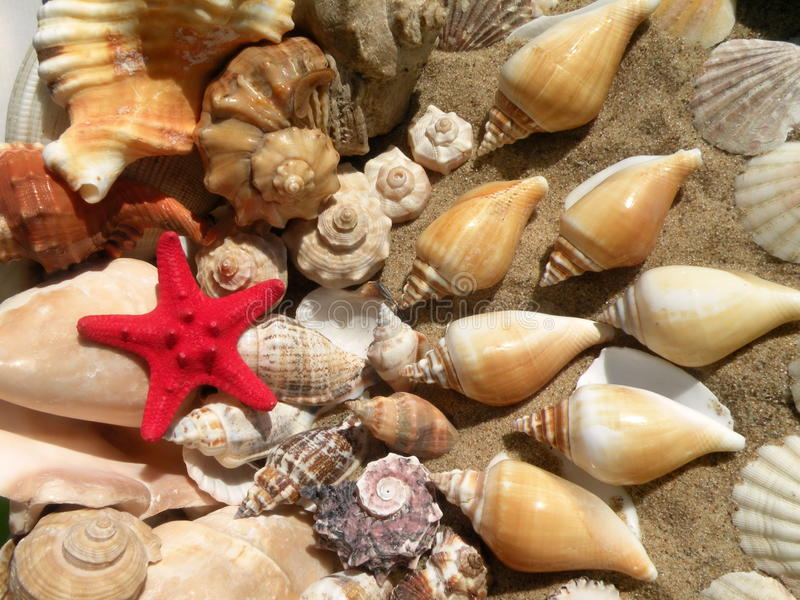 Морские звёзды и раковины стоковая фотография rf
