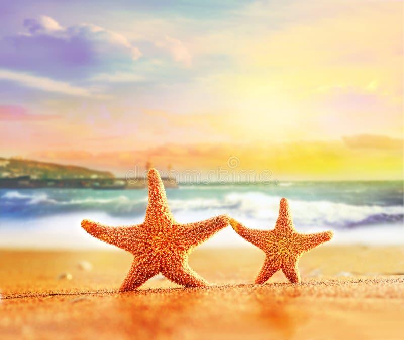 Морские звёзды на желтом песке около моря стоковое фото