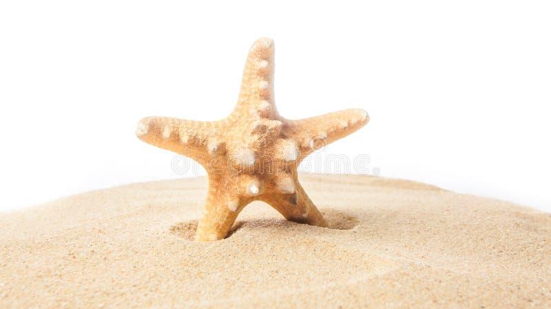 Морские звёзды на пляже изолированная предпосылкой белизна starfish стоковое фото