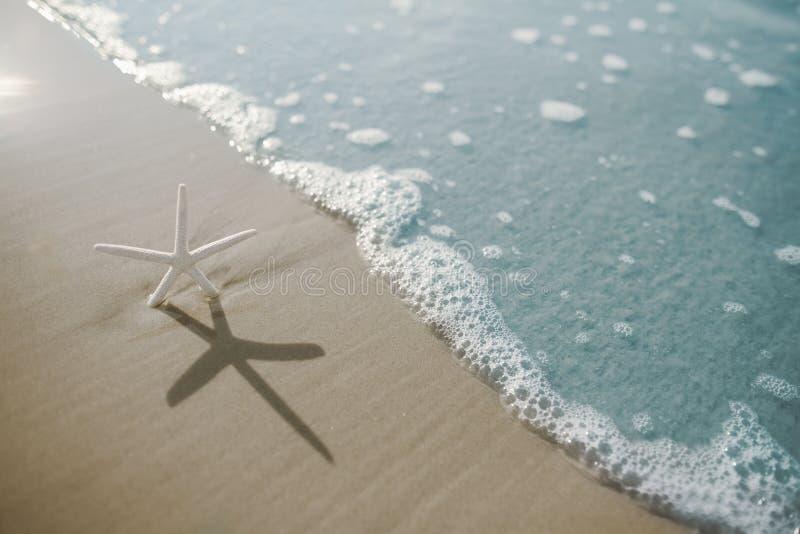 Морские звёзды на пляже стоковые фотографии rf