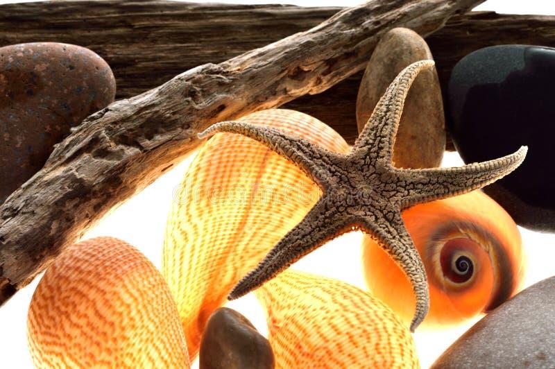 Морские звёзды, раковина, спираль, морская стоковое изображение