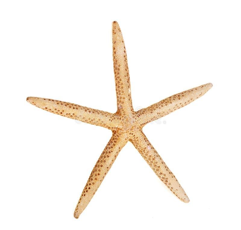 Морские звёзды стоковое изображение