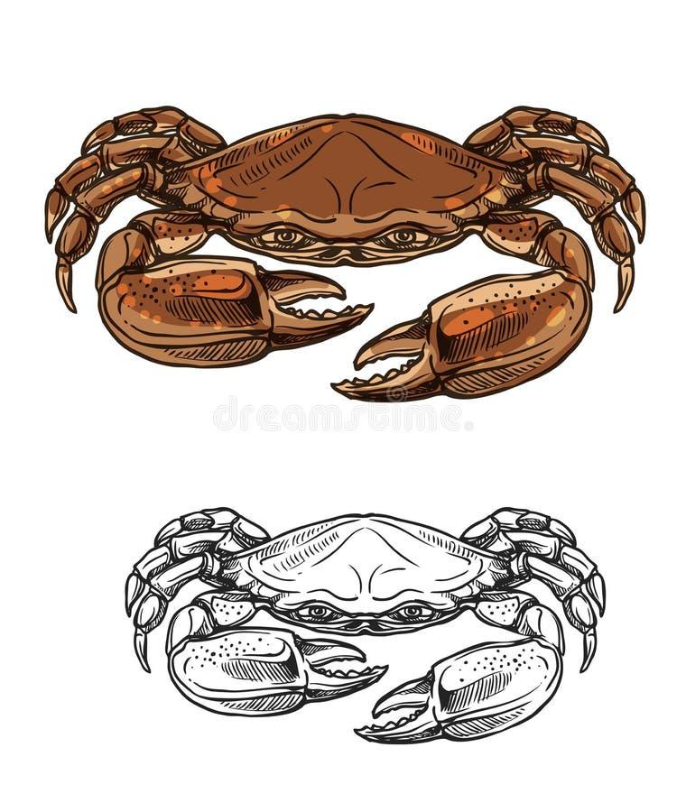 Морское животное краба, эскиз моллюска морепродуктов иллюстрация штока