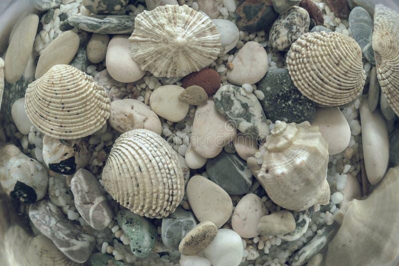 Морское дно в бледных лучах солнца стоковые фотографии rf