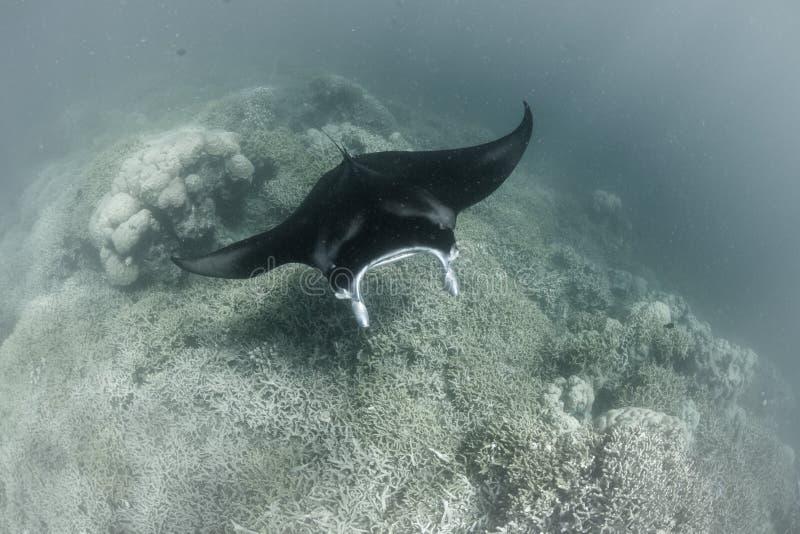 Морской дьявол скользя над станцией чистки стоковое фото