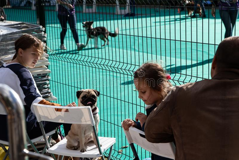 Москва, Россия, 14 лет 09 Фестиваль животных в Бауманском саду 2019 Английский паг с хозяевами наблюдает за собаками-конкурентами стоковое фото rf