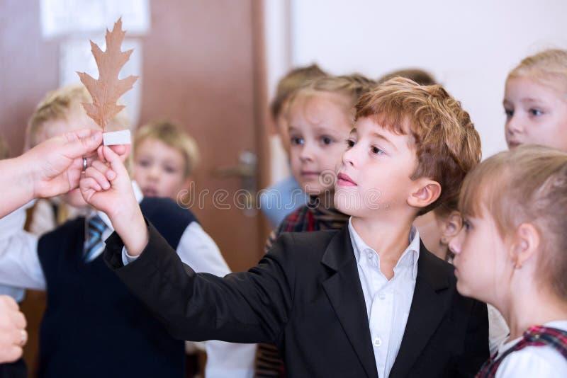 Москва, Россия, сентябрь 2015 Студент начальной школы в классе науки дает учителю лист дерева r стоковая фотография