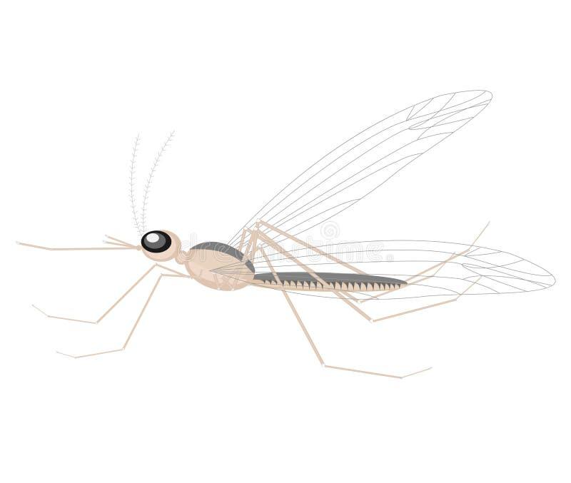 Москит, небольшое насекомое, сосать кровь Оно ушибает человека, носит инфекцию Почти на всем планета r иллюстрация штока