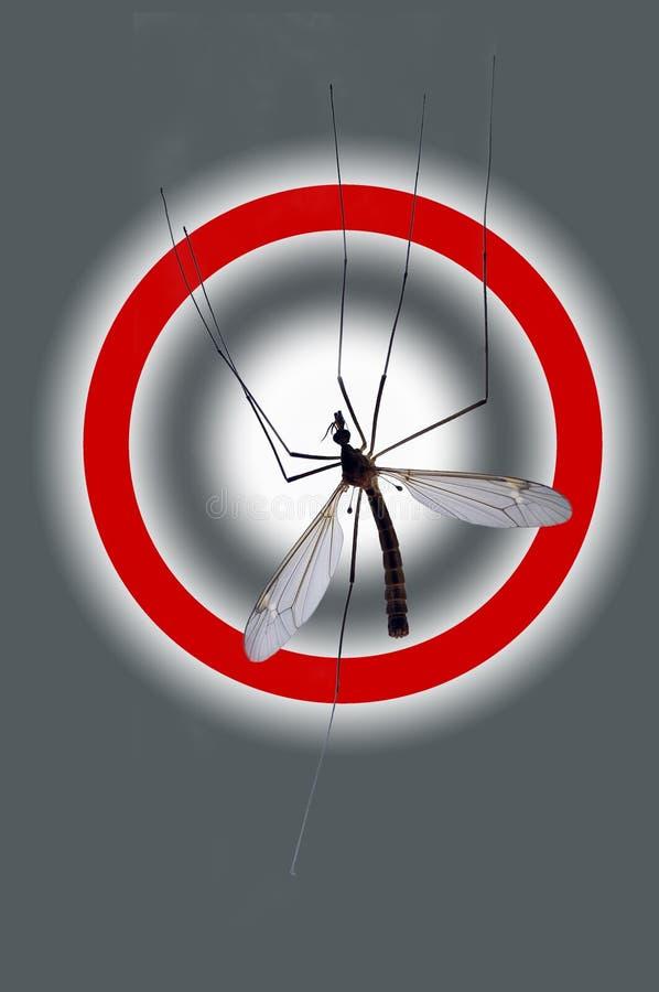 москит опасности стоковое изображение