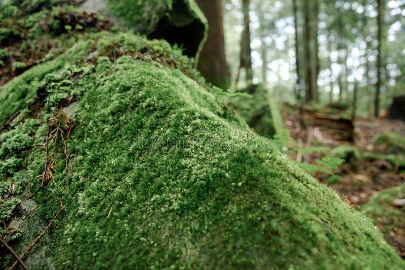 просто изменил, фото и описание мхов в сосновых лесах следующий