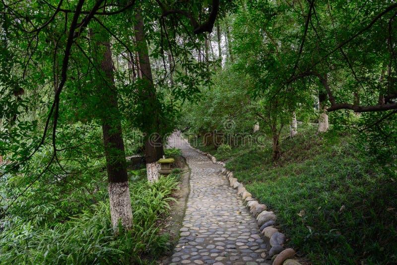 Мостить каменный путь в luxuriant древесинах лета стоковые изображения