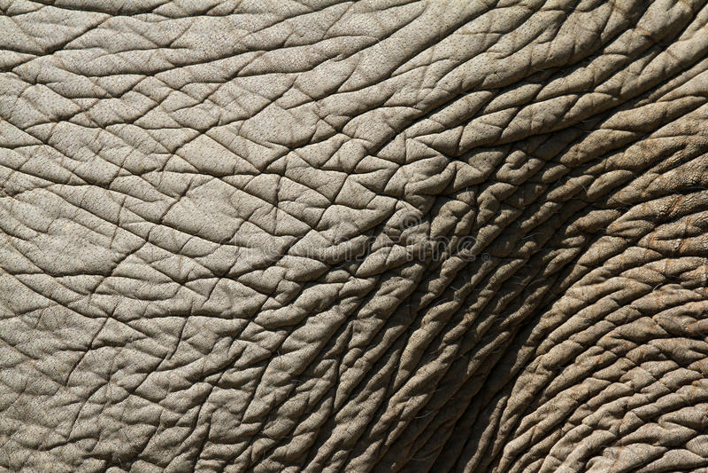 мостовье слона стоковое фото
