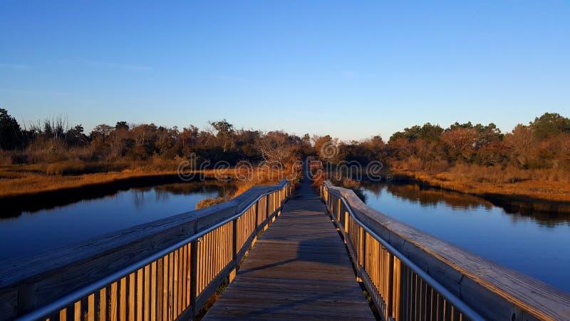 Мост болота острова Assateague стоковые фотографии rf