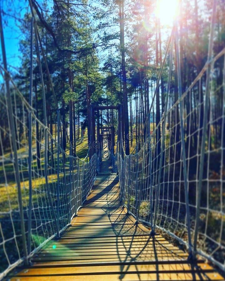 Мост веревочки в лесе стоковые изображения