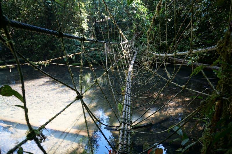 Мост веревочки джунглей стоковое изображение rf