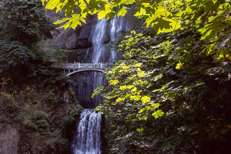 Мост водопада через листву стоковое фото
