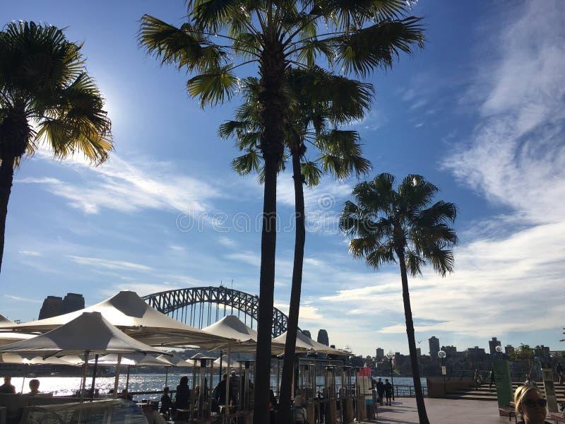 Мост гавани Сиднея через пальмы стоковое изображение rf