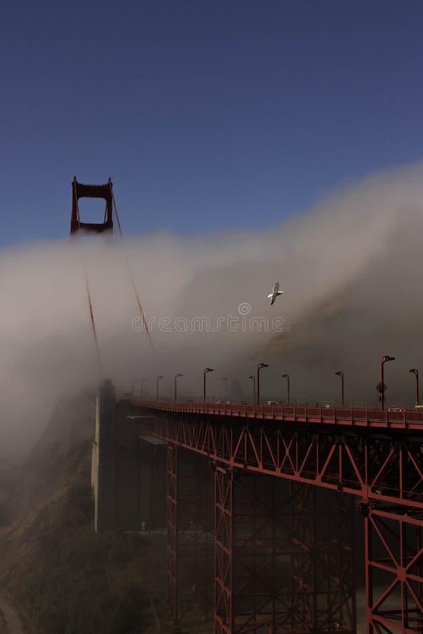 Мост золотого строба и чайка стоковые изображения rf