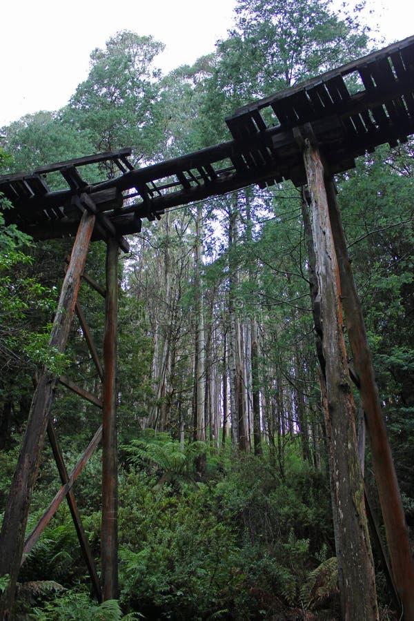 Мост козл леса Rubicon стоковые фотографии rf