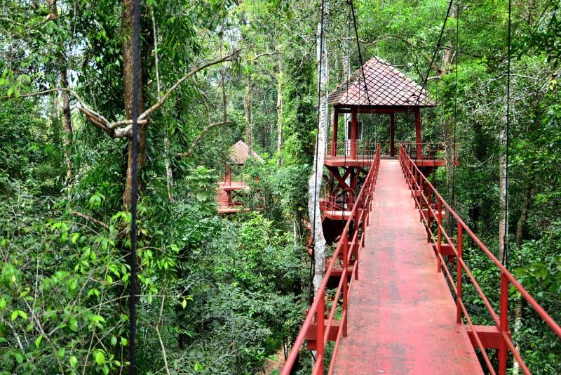 Мост к джунглям стоковые фото