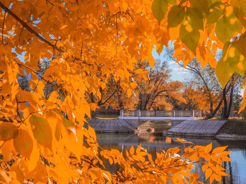Мост над речным руслом обрамленным желтым листопадом стоковая фотография
