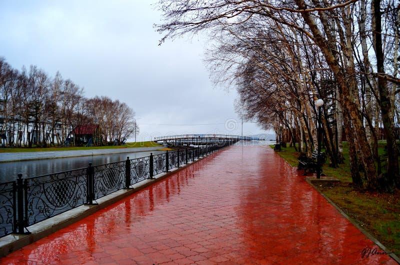 Мост на озере леса стоковая фотография rf