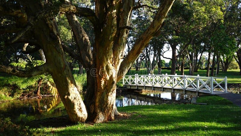 Мост пруда лилии в Centennial парке, Сиднее стоковое изображение