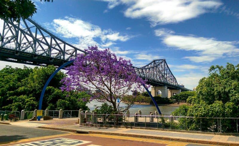 Мост реки Брисбена стоковые изображения rf