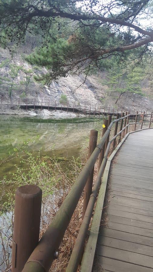 Мост реки для природы & человека стоковая фотография rf